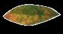 leaves single for bullets